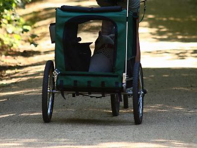 fahrrad hundeanh nger was sollte beachtet werden. Black Bedroom Furniture Sets. Home Design Ideas